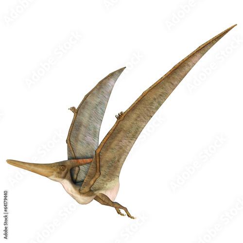 Pteranodon - 64179440