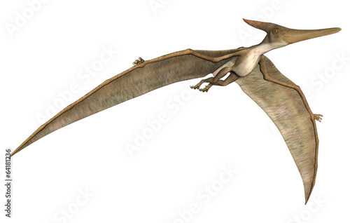 Pteranodon - 64181236