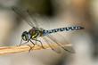 Leinwanddruck Bild - Libelle