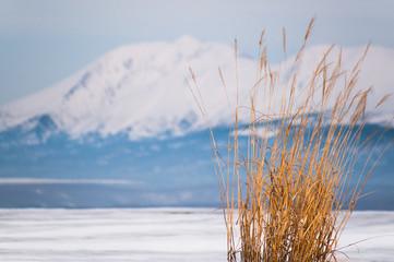 草と雪解けの十勝連山