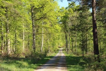 Waldweg im Schönbuch (Wald) im Frühjahr