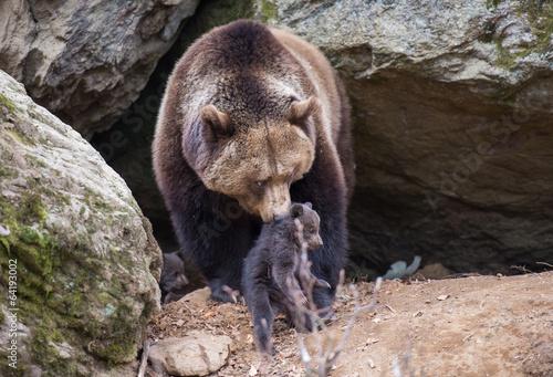 Fotobehang Dragen Braunbärmutter mit ihren Kleinen