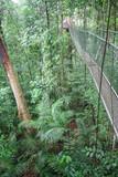 Fototapeta Fototapety mosty linowy / wiszący - Most linowy w dżungli © Rochu_2008