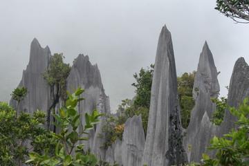 Borneo - Gunung Mulu