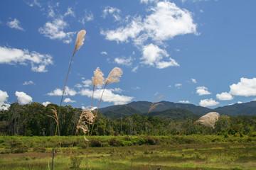 Borneo - Bario