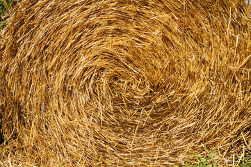 Spiral of yellow haystack