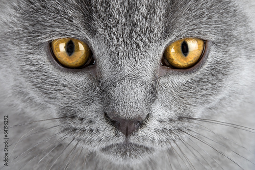 canvas print picture kitten eyes