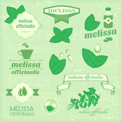 isolated herbs, melissa vector leaves