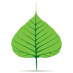Bodhi (Sacred Fig) leaf Vector Illustration.