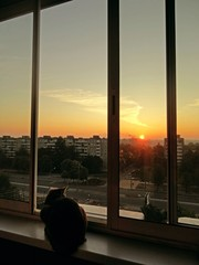cat sits at the window at sunset