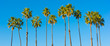 A row of palm trees with a sky blue background - 64199259