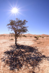 Tree under the desert sun. Sossusvlei Namibia
