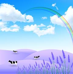 ラベンダー 牛 風景