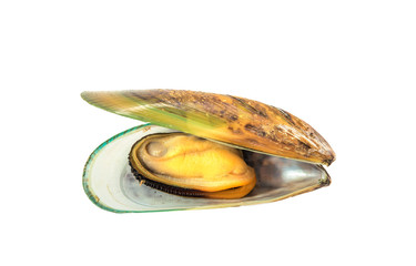 Boiled green mussel