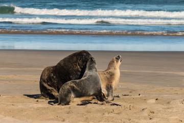 chasing sea lions