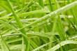 Ihrer Hintergrund mit grünem Gras