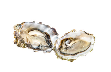Two fresh oysters