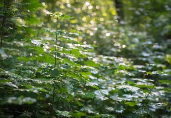 Dense and wet sunlit bushes