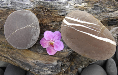 pink orchid and stone on Driftwood