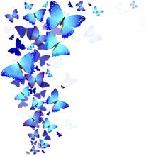 Fond des papillons