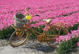 Fototapety bicycle in flower field