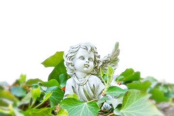 Engel im Efeu