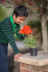 Little Boy Admiring Geranium Flowers in Spring