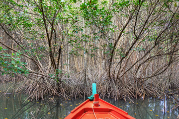Mangrove forest on summer