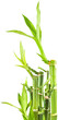 bambou asiatique
