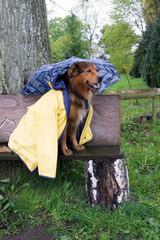Fröhlicher Hund im Regen