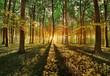 spring forest - 64230018