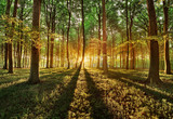 Fototapety spring forest