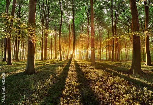 Fotobehang Bossen spring forest