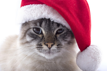 Cat with Santa Claus hat isolated on white background