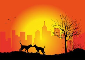 coppia di cani al tramonto