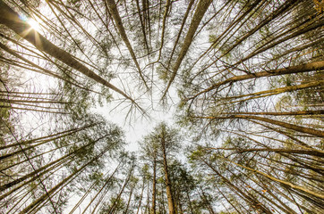 In the deep forest. looking up shot with fisheye lens