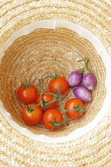 harvested tomatoes in farmer's hat