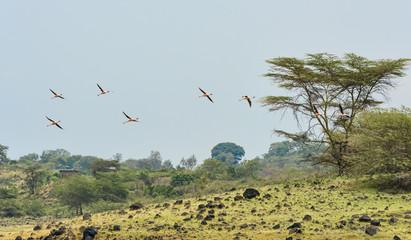 Tansania-Flamingo-10944