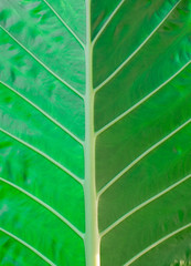 close up texture of green leaf