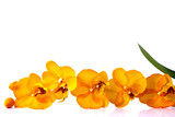 Fototapety orange streaked orchid flower with leaf, isolated