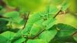Panning close-up shot of green fresh leaves