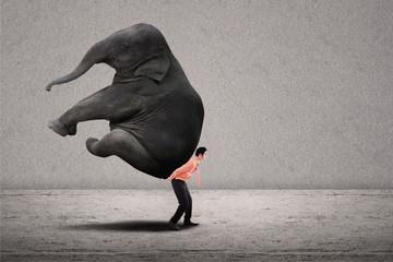Business leader lifting elephant on grey