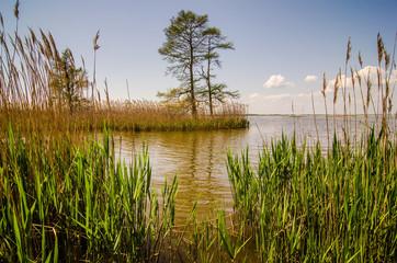 nature around mattamuskeet lake north carolina