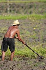 Man Farming
