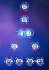 Meiosi duplicazione cellulare divisione