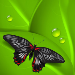 Green background with butterfly and dew