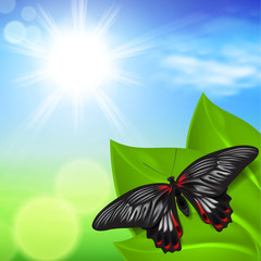 Sunny background with green grass and butterfly