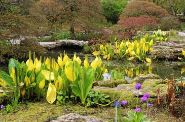 Rockery area in an English garden