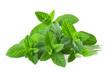 mint plants - 64258670