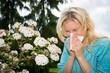 allergic 2